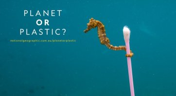 planet or plastic41488204232..jpg