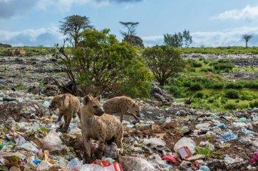 plastic-waste-single-use-worldwide-consumption-animals-1875386773.jpg