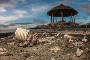 plastic-waste-single-use-worldwide-consumption-animals-31481123383.jpg