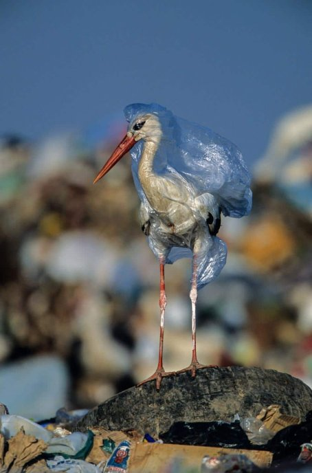 plastic-waste-single-use-worldwide-consumption-animals-498440995.jpg